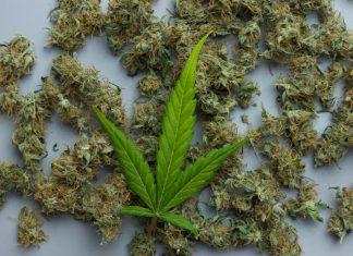 Marijuana Beasters